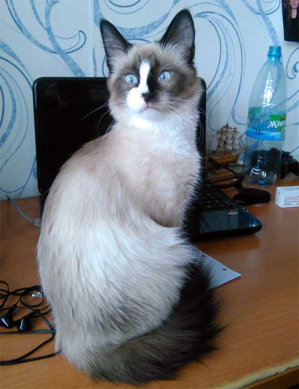 Кошечка красавица
