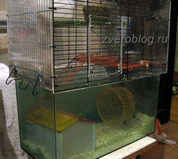 Домик для японских карликовых мышек