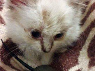 Маленький бездомный котенок