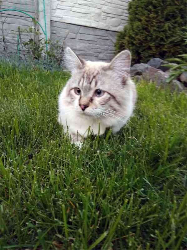 Кот отдыхает на зеленой траве