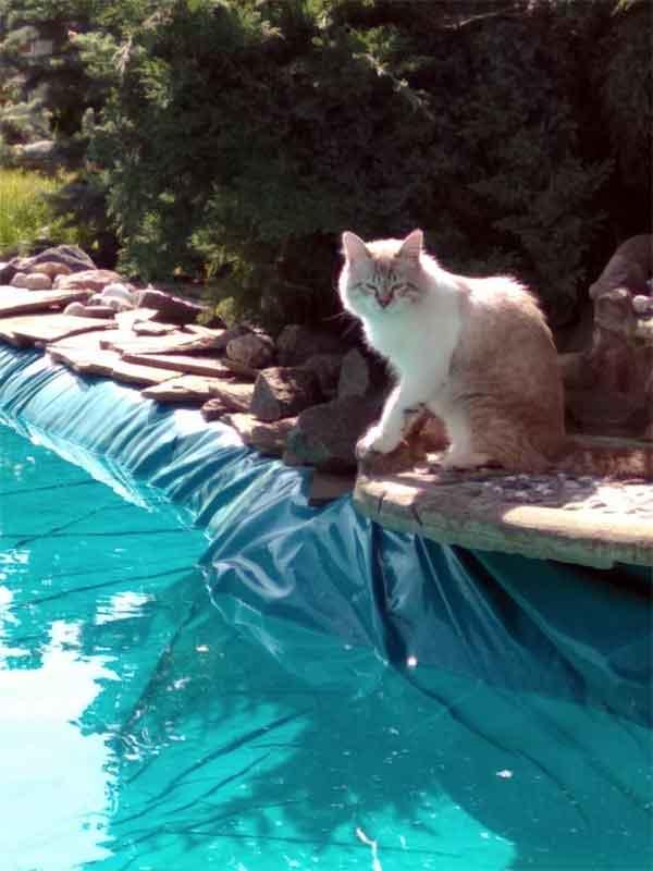 Кот помогает строить бассейн