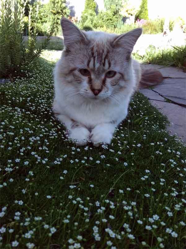Кот отдыхает на лугу