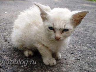 Белый бездомный котенок