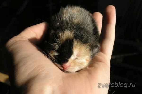 Котенок спит на ладошке