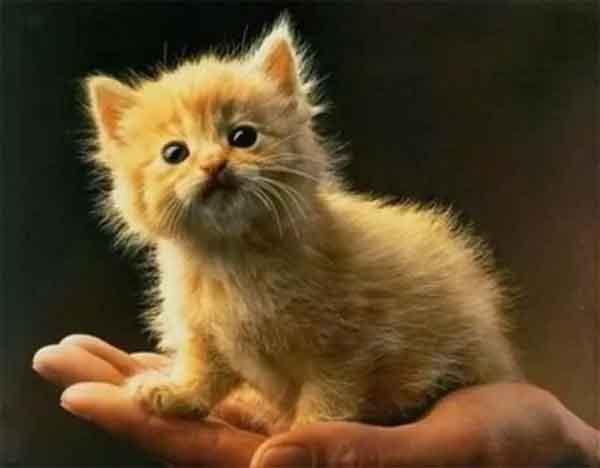 Смешной и забавный рыжий котенок смотрит на мир