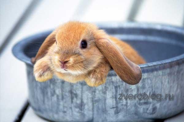 Содержание декоративный кроликов в домашних условиях и уход