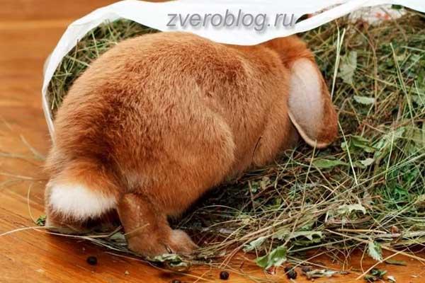 Как содержать и ухаживать за кроликами
