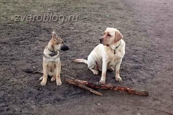 Общение собаки с собчьем социуме