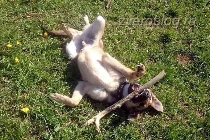 Выгул собаки: счастье без границ!