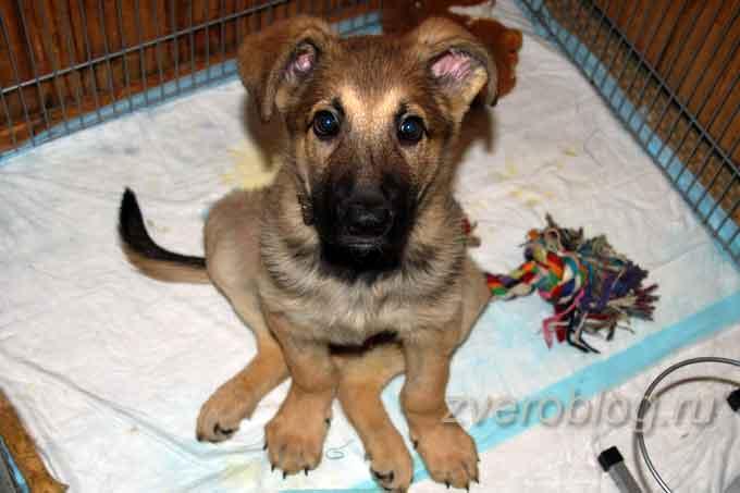 Двухмесячный щенок в вольере из-за болезни