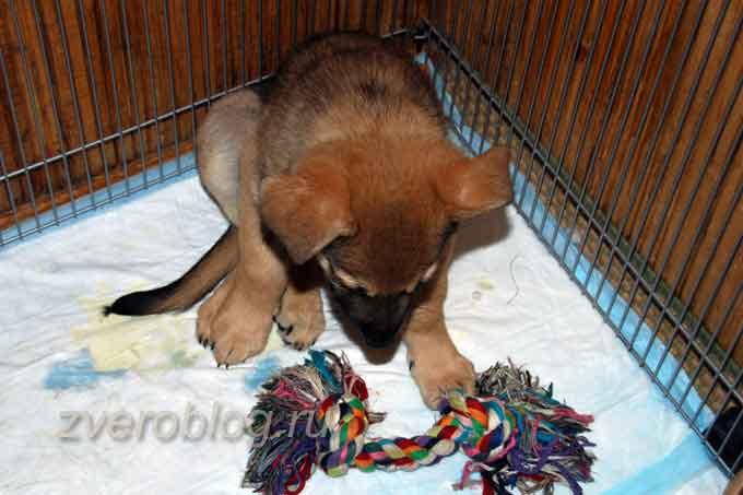 Грустный щенок сидит в вольере с игрушкой