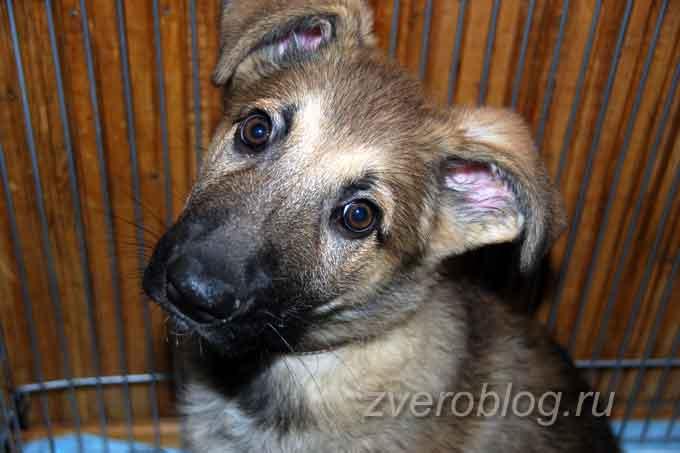 Портрет собаки - щенок в 2 месяца