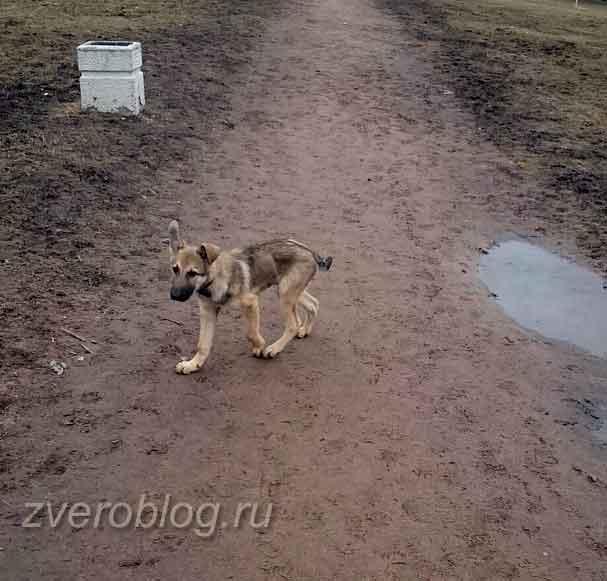 Первый выгул щенка