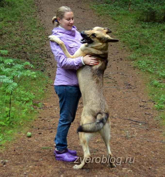 Собачьи обнимашки