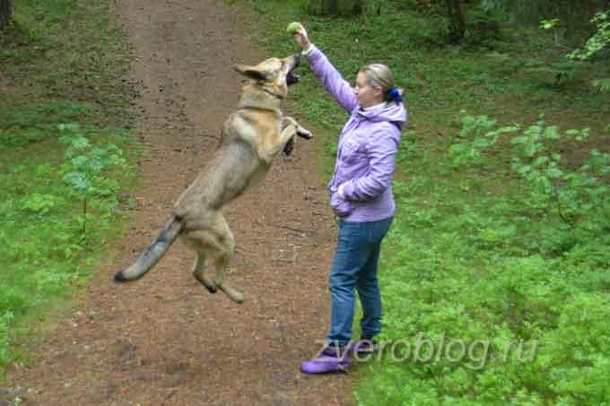 Игры с собакой на прогулке