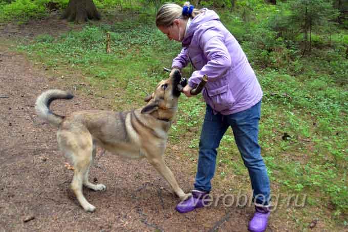 Пёс играет с женщиной