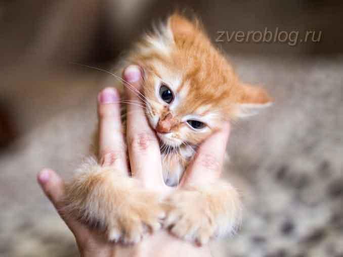 Маленький рыжий котенок