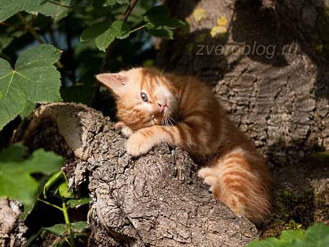 Котенок сидит на дереве