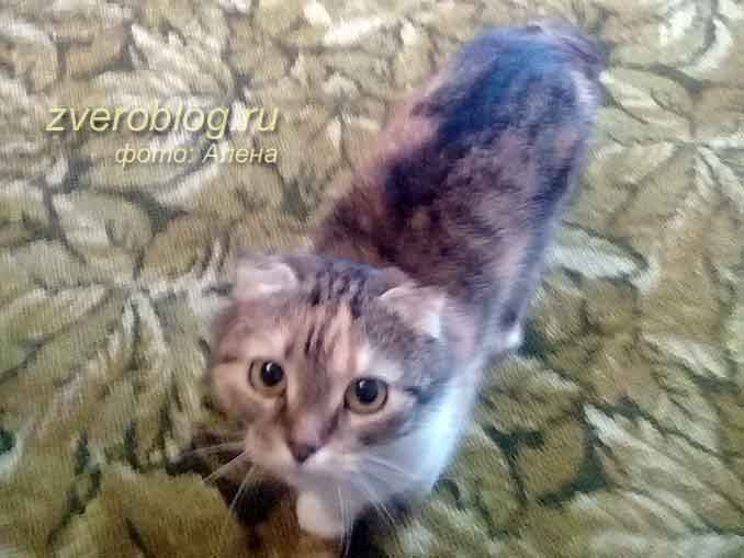 Кошечка молодая