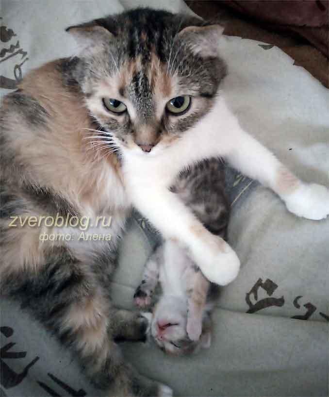 Кошка с маленьким котенком