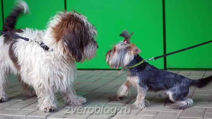 Две собаки обнюхивают друг друга