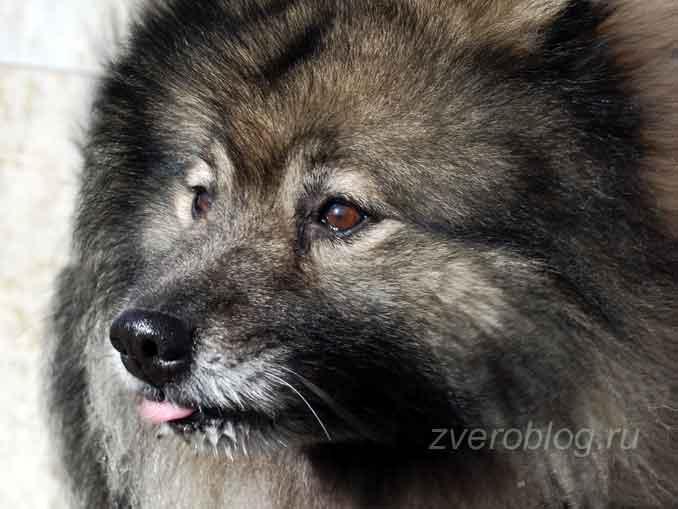 Острое обоняние собак