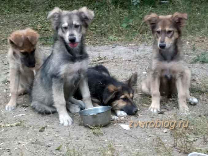 Четыре бездомных щенка ищут дом и друга