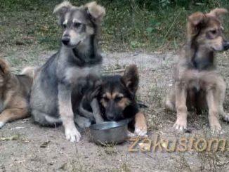 В Воронеже щенки ищут дом