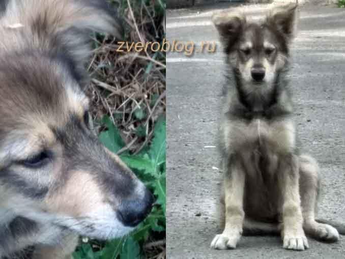Бездомный и милый щенок ишет дом в Воронеже