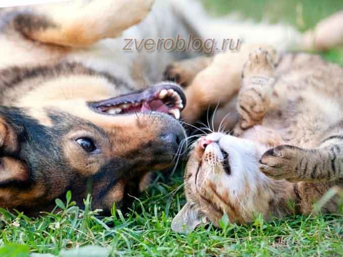 Кошка и собака - друзья навек!