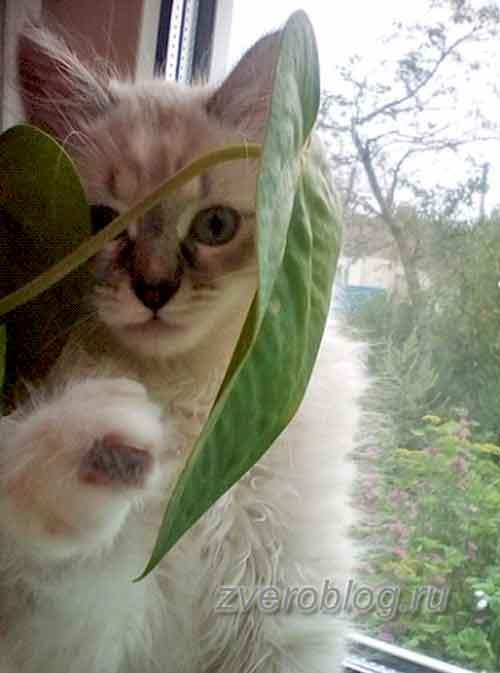 Милый и забавный котенок - история из жизни