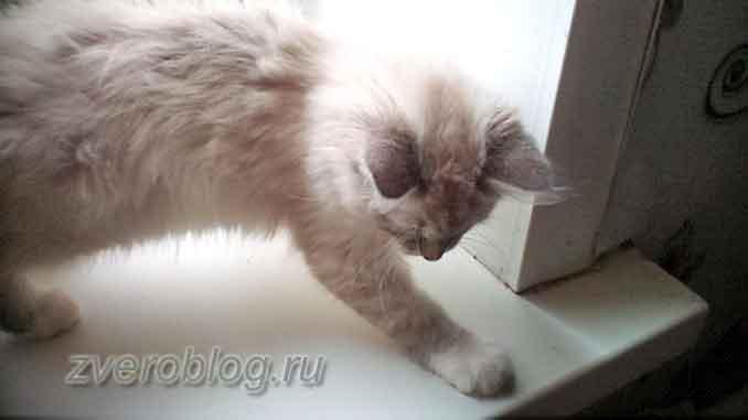 Котенок, который мечтает о ласке и не даёт спать по ночам