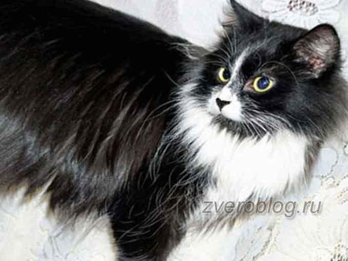 Кошечка черная с белым. невероятная история о заботливой маме кошке