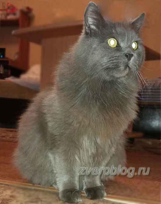Подарок судьбы - кот Грей. Лучшая умная нянька для дочери