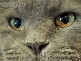 История кота Грея - усатого няня моей маленькой дочери