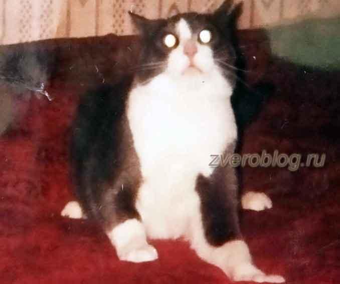 Истории о животных - черно-белый кот