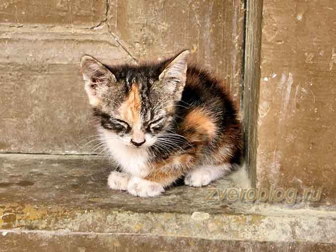Малнький бездомный котенок