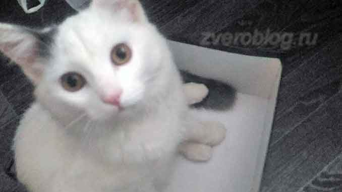 Белый кот из общежития