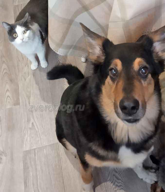 История из жизни о дружбе кота и собаки