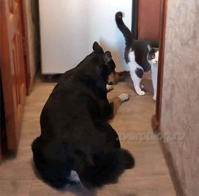 история о дружбе животных - кот Морти и пес Рицка