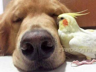 История дружбы собаки и попугая