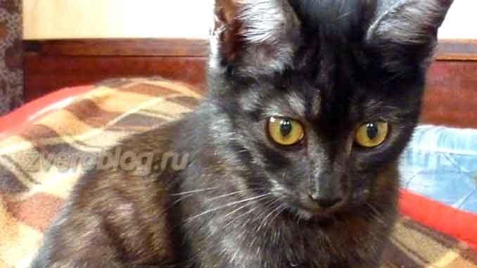 История о том, как котенок мяшей ловить учился