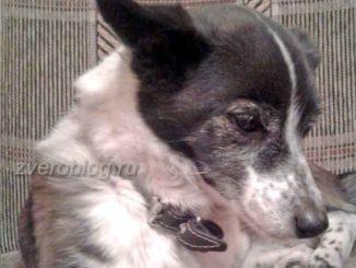 История про шуструю и непоседливую собаку Лизу