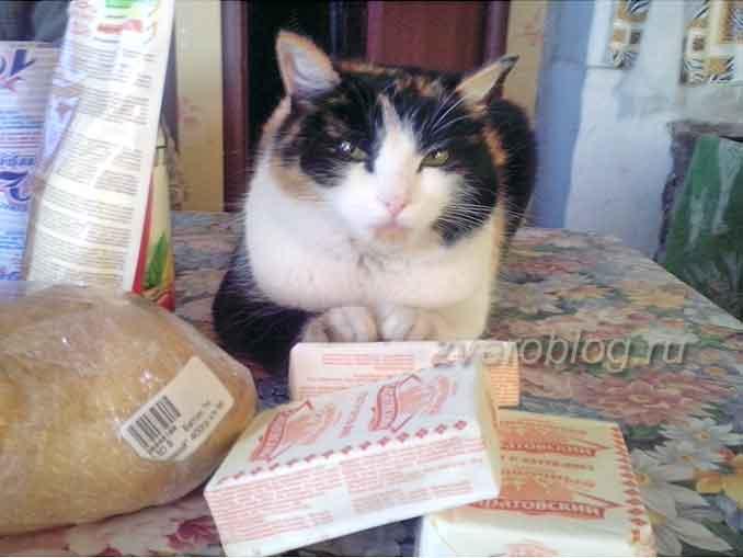 Трехцветная кошка - залог счастья в доме: история из жизни