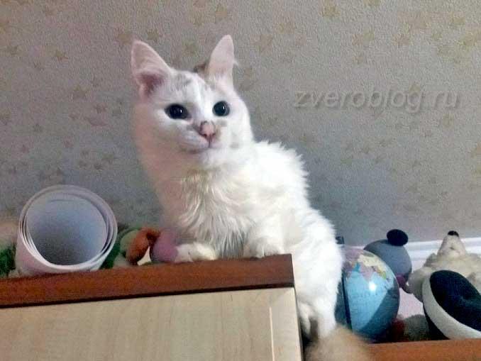 Спасенный из парка котенок - история кота найденыша
