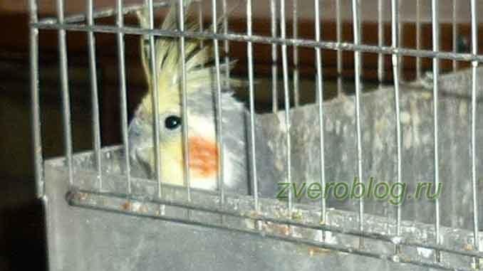 История о попугае, который следит за всеми в комнате