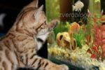 Терпеливая и умная кошка: забавная история из жизни