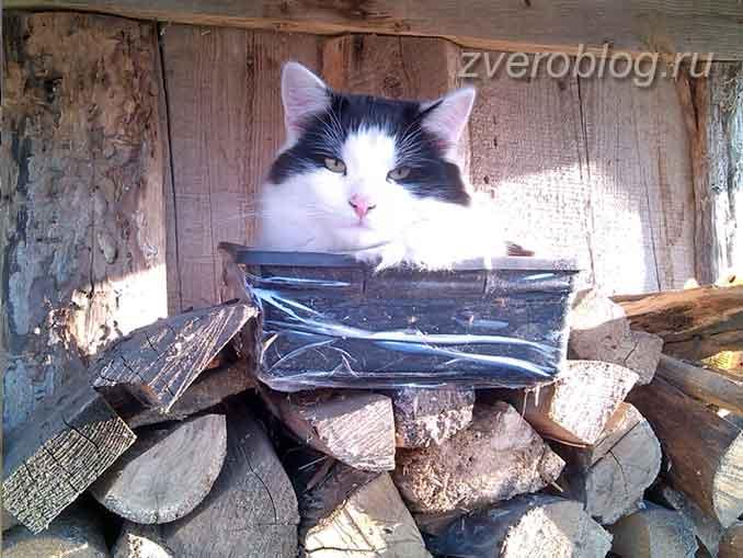 Упитанный здоровый кот в сарае на дровах
