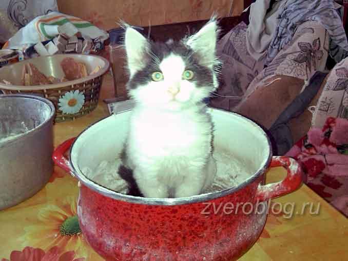 Котенок сидит в тазике. Спасение котенка из стены дома