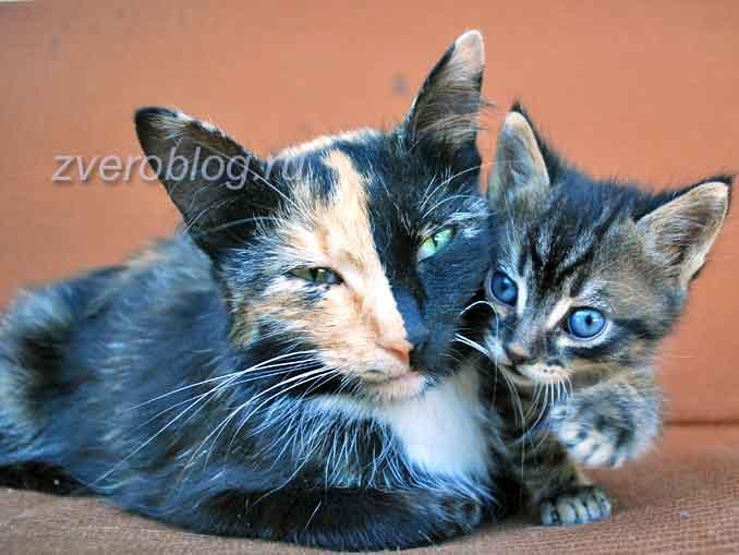 Уличная мама кошка с котенком